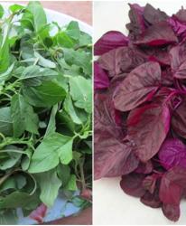 6 loại rau không sử dụng thuốc trừ sâu lại giàu canxi hơn sữa, mùa hè ai không ăn thì phí